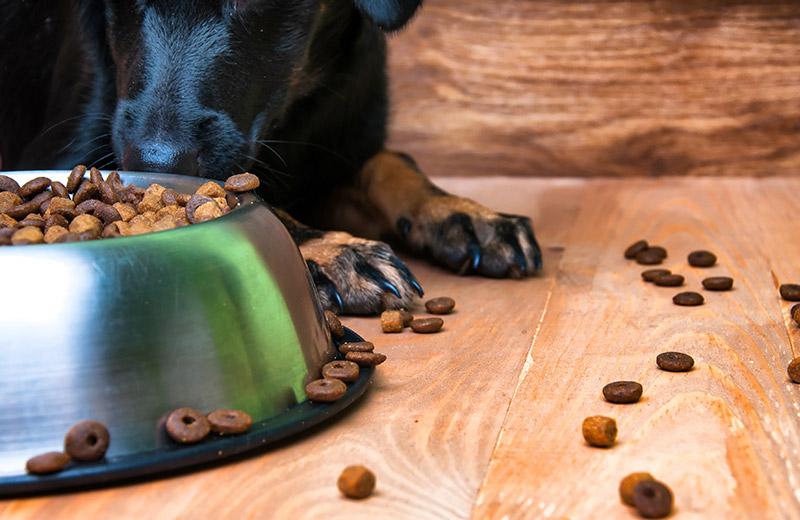 Dog next to bowl of spilled dog food