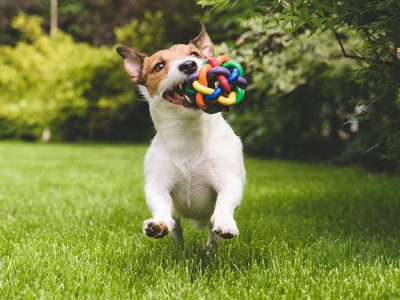 Happy Dog Playing with Toy