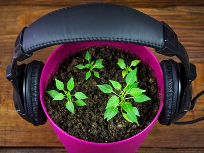 Gardening podcast being played through headphones, which are on a pot of plants