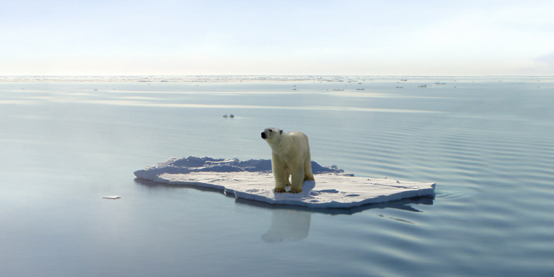 A polar bear on a lone piece of ice illustrating the climate changing