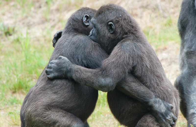 Fascinating Animal Behaviour You Might Recognise in Your Friends