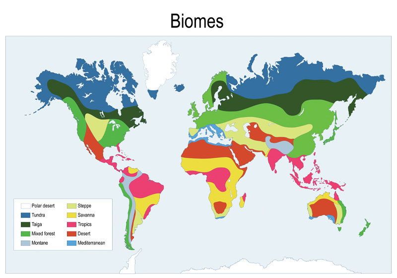 A map of the biomes.