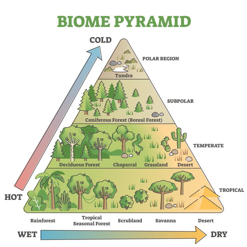 A pyramid explaining the biomes.
