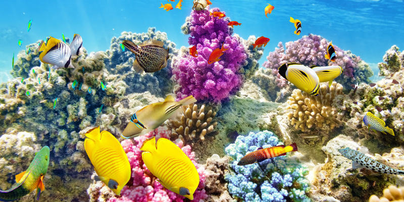 Wonderful and beautiful underwater world with corals and tropical fish in one of the aquatic biomes.
