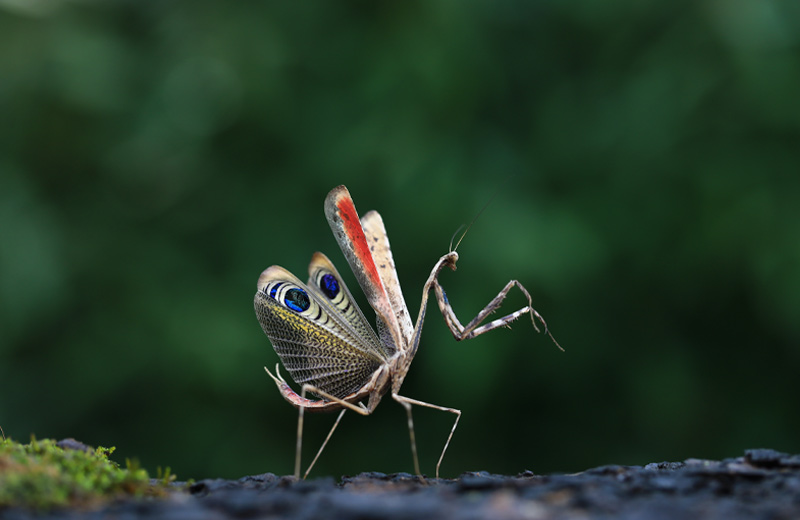 The Secret Life of Insects and Their Many Defence Mechanisms