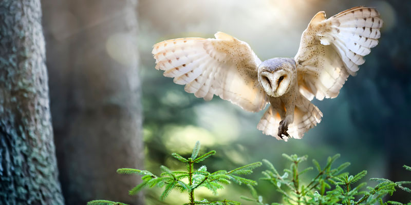 An owl, one of the correspondences of Lilith, in flight.