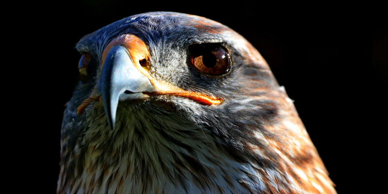 Portrait of a bird taken by Scott Duffield, a photographer who has been selected as finalist for the Outdoor Photo of the Year 2021.