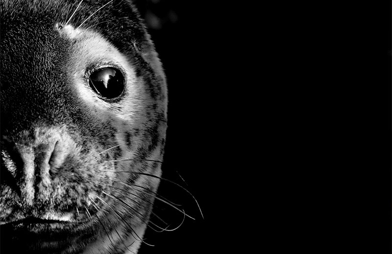 Seal of Approval: From Digital Photography Course to Outdoor Photo of the Year Finalist